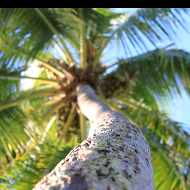 Resting under a palm
