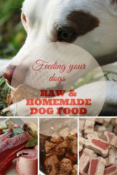 This is a guide for feeding your dogs homemade and unprocessed meals. Remember, homemade dog food is considered as the healthiest feeding method for your furry friends.  #rawfeeding