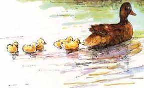 Alle eendjes zwemmen in het water, falderalderire, falderare,  Alle eendjes zwemmen in het water, falderalderaldarelderal