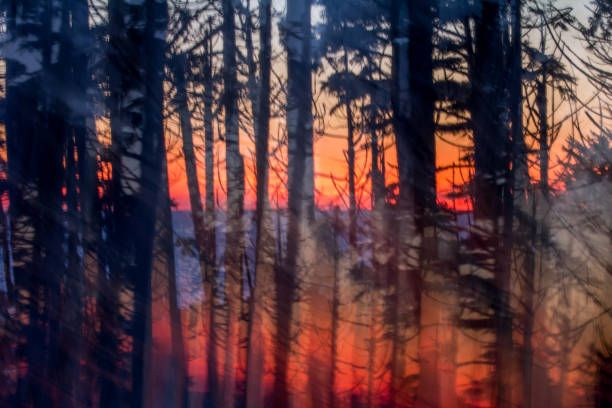 abstract vertical panning shot of forest at sunset