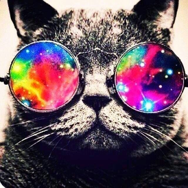 galaxy glasses on a cool cat animals pinterest cats