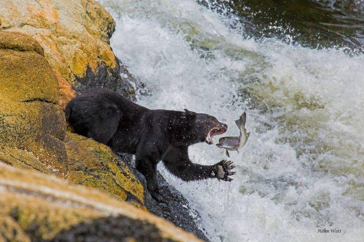 http://vipmedia.globalnews.ca/2014/12/helen-watt-verney-falls.jpg