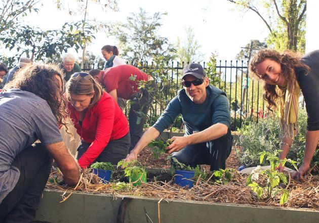 Milkwood Permaculture are bringing honey bees, vertical gardens and organic veggies to Redfern's new secret garden.