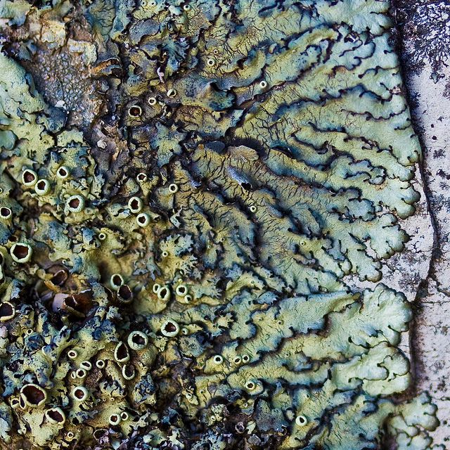 This has some strong colours in it and almost looks metallic, lots of different patterns and rough textures