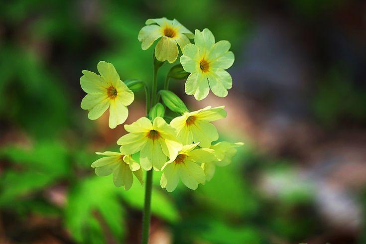 Цветы для дачи отзывы фото