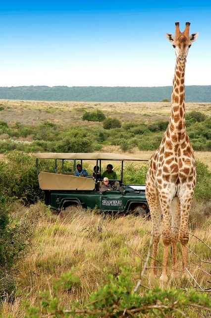 Shamwari Game Reserve - Paterson, South Africa