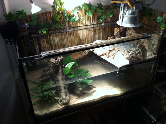 25 best ideas about turtle aquarium on pinterest pet for Turtle fish tank