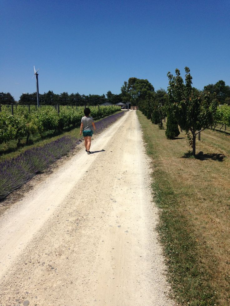 on the Martinborough Winery Trail