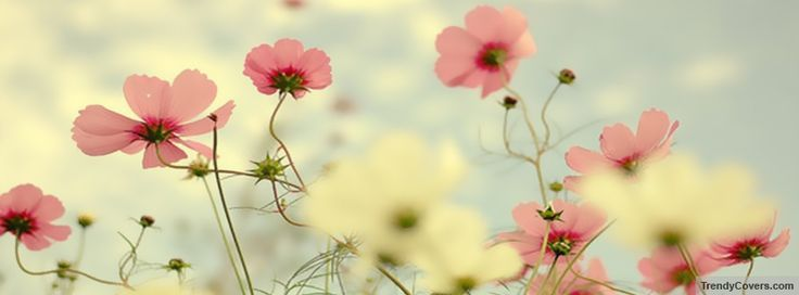 facebook cover photos flowers - Google Search