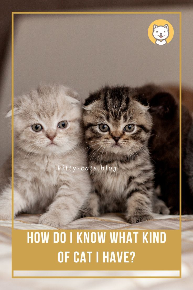 How Do I Know What Kind Of Cat I Have Kitty Cats Blog Cats Kinds Of Cats Cat Breeds