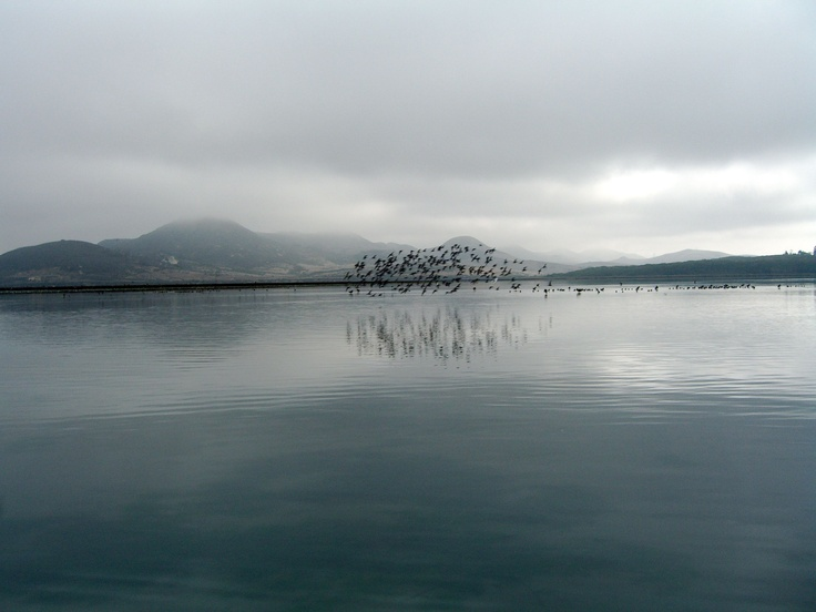 Waterfowl over Morro Bay.