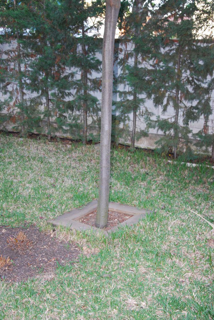 Alcorque de arbol de jardin con tableros de madera