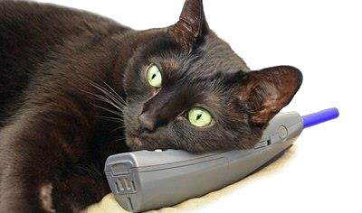 Heeft u een vraag, een suggestie, een klacht, wilt u ons extra steunen of een algemene opmerking over het werk dat wij doen? Kortom, u wilt met ons contact opnemen?  Dat kan.  U kunt ons mailen, schrijven of bellen: - Mailen kan naar ons algemene emailadres: info@dierennood.nl  - Schrijven kan naar: Kabelhof 60 - 3072WJ Rotterdam - See more at: http://dierennood.nl/Contact.html#sthash.dygnnNO9.dpuf
