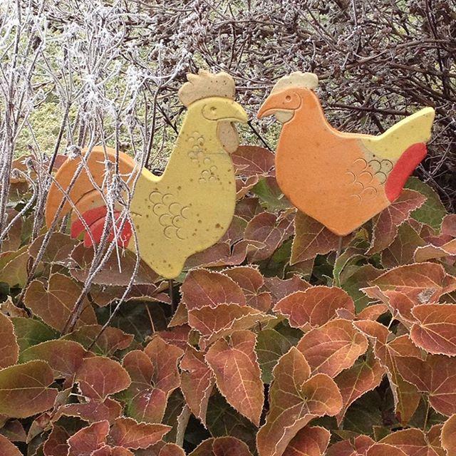 #rime#frost#rauhreif#whitefrost#hoarfrost#gefroren#winter#nature #natur#garden#garten#naturelovers#hahn#henne#hühner#hahnundhenne#chicken#two#zwei#ceramics#keramik#elfenblume#barrenwort#herzform#heartshape#herbstfarben#gartengestaltung#gardendecor#stimmung#silence