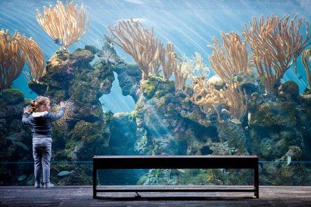 Bermuda Zoo and Aquarium   In Bermuda - Things To Do In Bermuda & Best Places To Visit In Bermuda ...