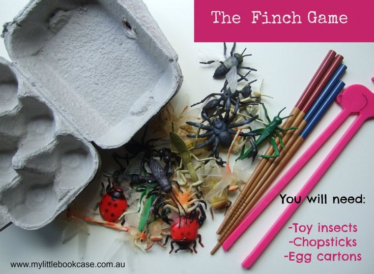 The finch game. Picking up insects with chopsticks and putting them in an egg carton.