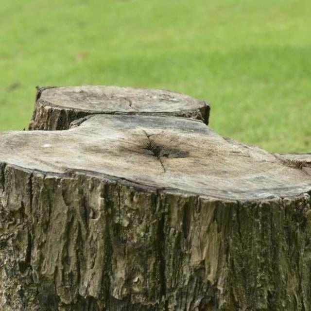 A tree stump in a yard.