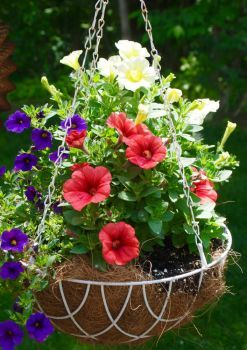 Pretty Hanging Basket (70 pieces)