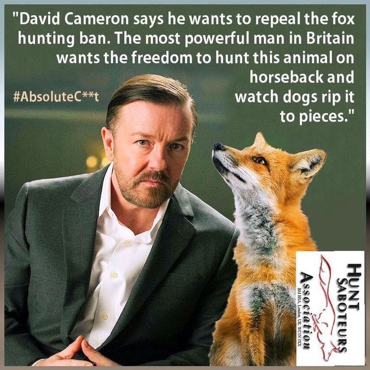 is fox hunting cruel essay Hunting animals is wrong graham harvey 13 december 2002  i want to stop this cruel and unnecessary thing  absent from fox-hunting but the argument about liberty and livelihood would.