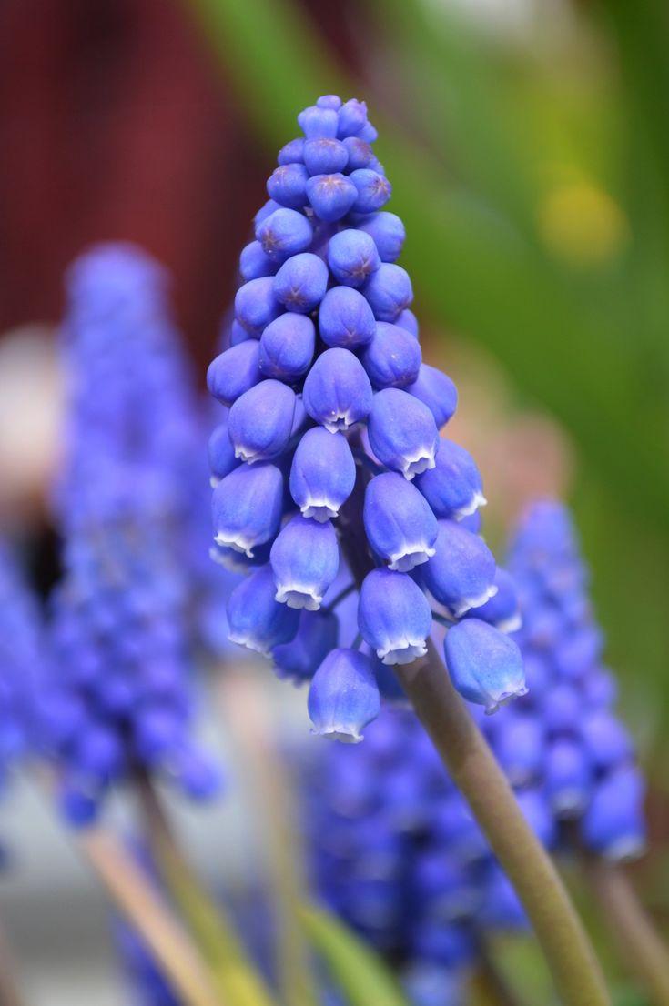 блюда цветок синий мышиный фото нему подошёл, катки