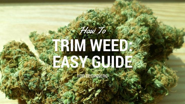 Trimming weed is an important part of the growing process because it is the first step in the actual drying and curing of the weed you just spent weeks growing. If you are wondering how to trim weed, here is a nice little guide written by us, based on the video brought to you by the guys over at the School of Hard Nugs. Read the entire article: https://indoorgrowguru.com/how-to-trim-weed/