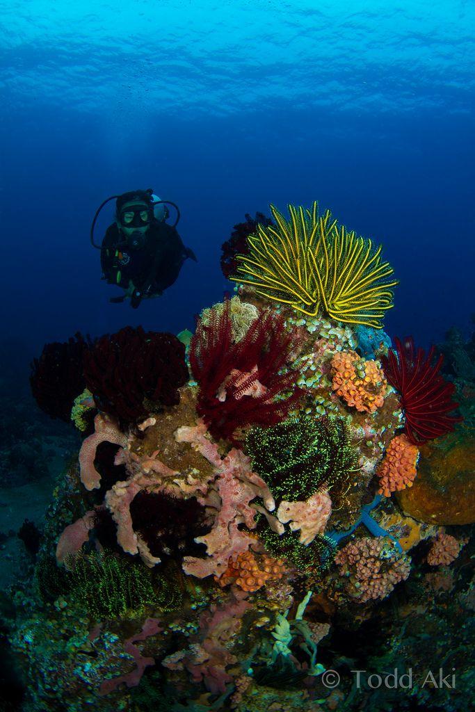 Die besten 25+ Korallenriff Kunst Ideen auf Pinterest Koralle - die farbe koralle interieur teil 1