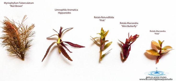 Para reconocer las plantas acuáticas más comunes.