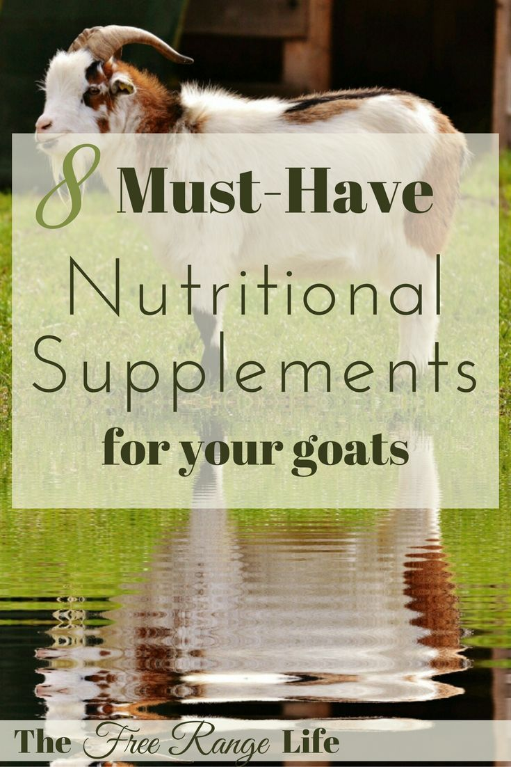 Keep these 8 must have nutritional supplements for goats on hand in your barn or medicine cabinet. Your goats will be happier and healthier and in top condition.