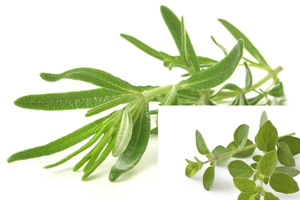 Illatos gyógynövények cukorbetegség ellen, ami a hasi zsírral is felszámol!