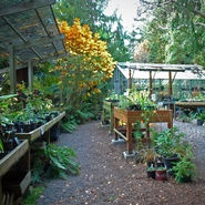 The Kruckeberg Botanic Garden Is A Public Containing Unique Blend Of Pacific Northwest Native