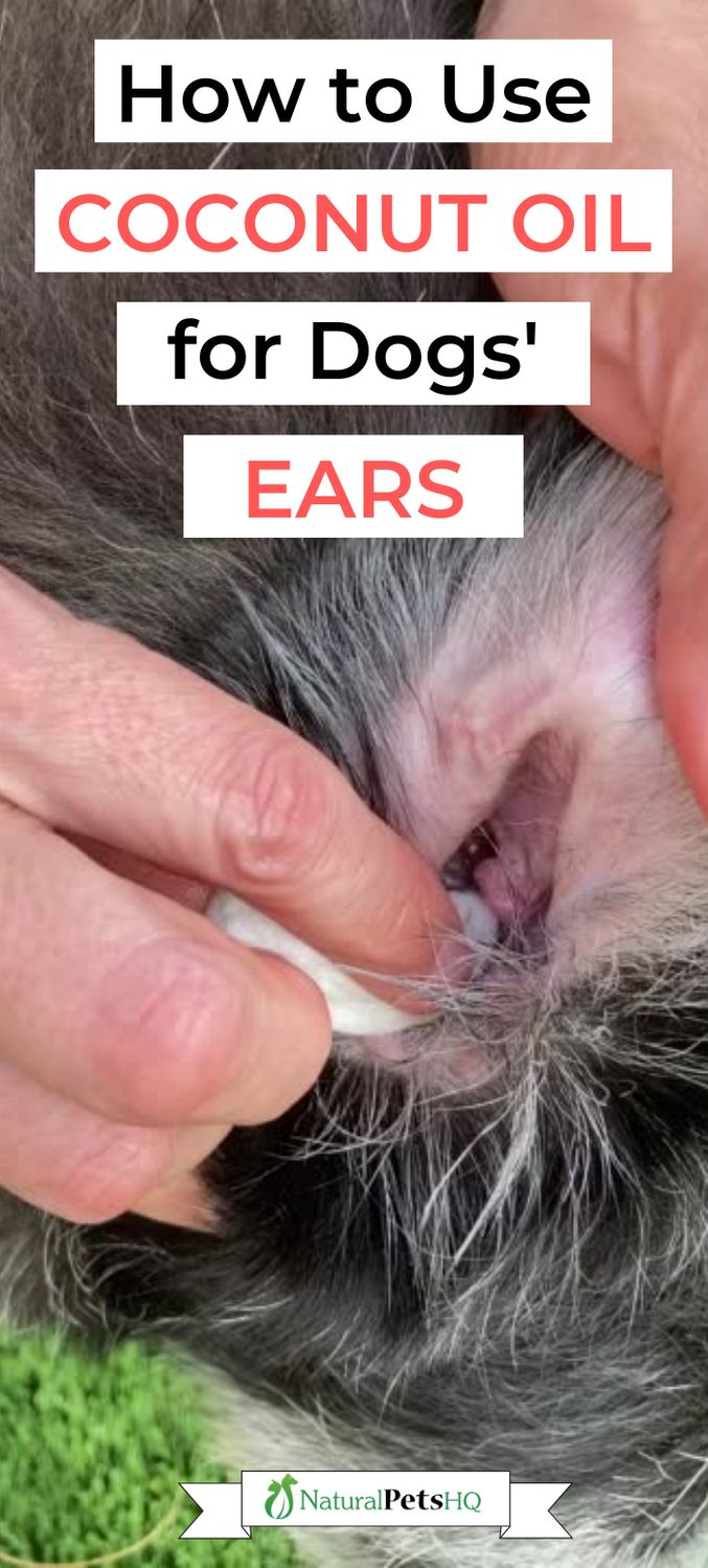 Can I Use Coconut Oil For My Dog S Ears Natural Pets Hq Coconut Oil For Dogs Coconut Oil Dogs Skin Dog Ear Infection Remedy