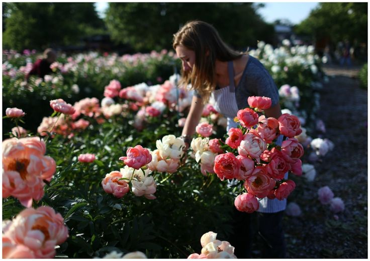 June 5-7, 2015 Seasonal Floral Intensive Workshop at Floret: Created especially for floral and event designers, this extra special event will focus on the dreamiest, most romantic flower of the late spring garden: the peony.