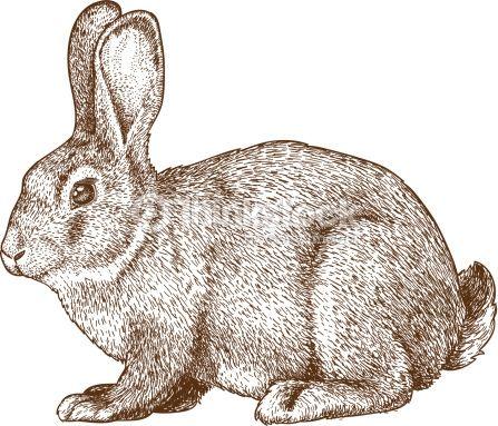 18 best Rabbit tattoo inspiration images on Pinterest ...