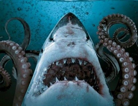 Craziest SHARK movies