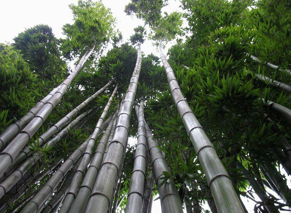 Lessons In Entrepreneurship From The Chinese Bamboo Tree