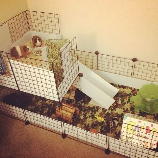 Best 25 shaved guinea pigs ideas on pinterest what is a for Guinea pig cage for 3