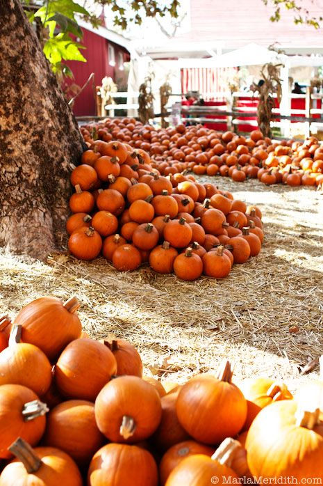 So much fun at the Pumpkin Patch! FamilyFreshCooking.com © MarlaMeridith.com: