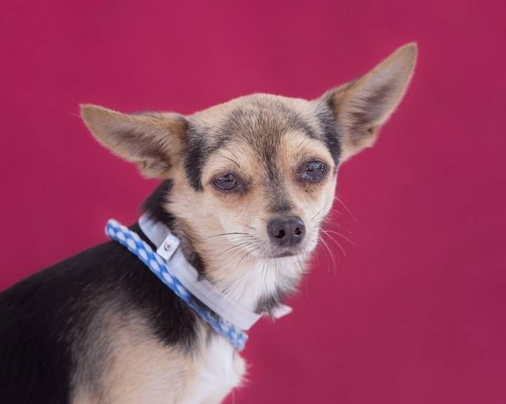 Craigslist Post *URGENT Pit Puppies FREE* free puppys