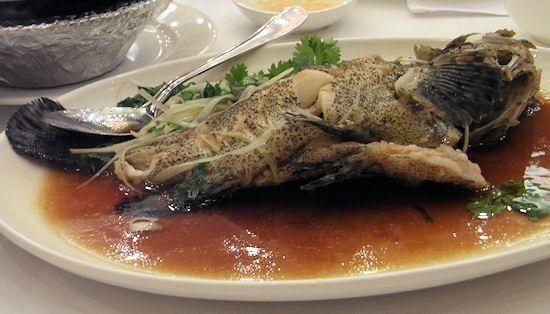 ガルーパ(清蒸石班魚)
