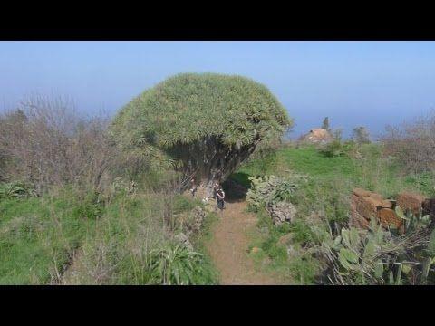 Wandeling op La Palma in het noordwesten gelegen dorpje Las Tricias. http://www.lapalma-wandelen.nl