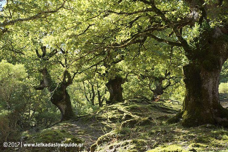 Το δάσος των Σκάρων.