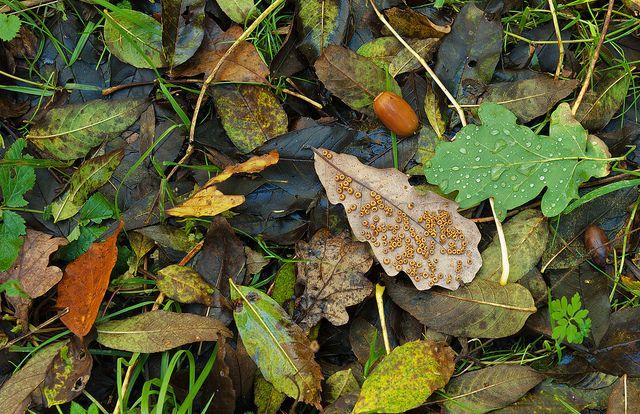 autumn leaves by NIrelandeye, via Flickr