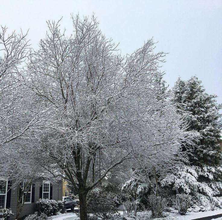 Oohh Portland and your snow.. enough already!! #portland #forestheights #pnw #pnwonderland #snow #upperleftusa #trees #nomoresnow #oregon #weather