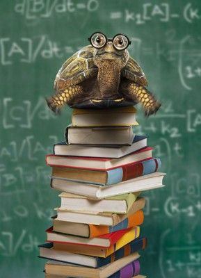 My kind of tortoise! The new version of a bookworm! http://www.cafepress.com/tlconline