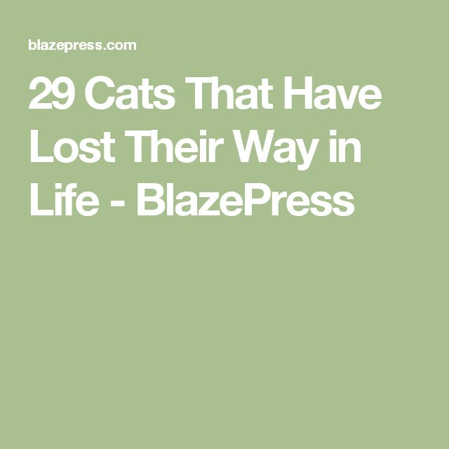 Best GIF Reactions Images On Pinterest Funny Gifs Funny - 29 cats lost way life