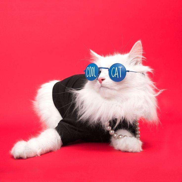 Keep it cool kitty cat P.S. Smitten Kittens Pinterest