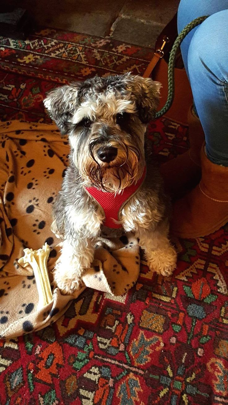 Lord Crewe Arms Dog Friendly