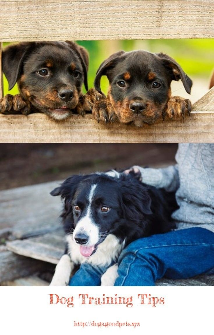 Dog Whisperer Tips On Puppy Training Dog Spay Dogs Expensive Dogs