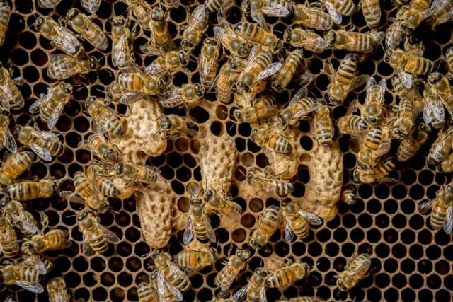 No other insect has served the needs of man like the honey bee. Here are 10 facts about honey bees you might not know.