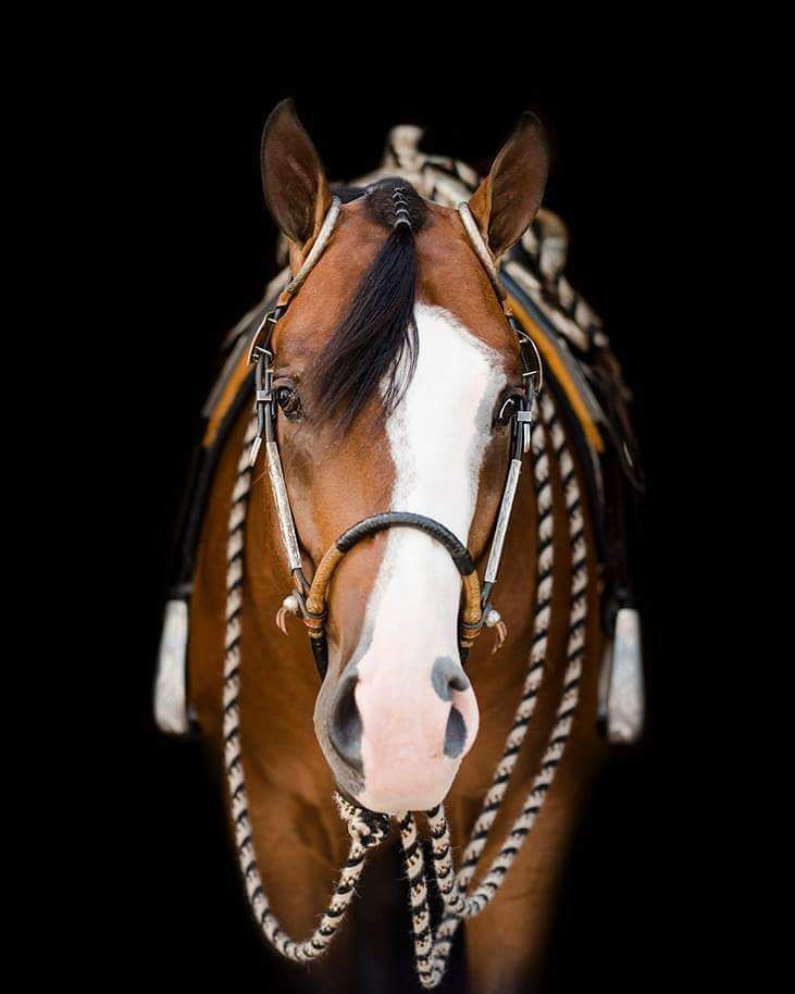 So im doing a thing... starting tonight and into Monday I'm going to be doing my very own #NationalDayOfTheHorse. All you have to do to enter is Dm me one good quality picture of you and your horse, it can be a selfie. A show picture, whatever you choose. I'll post all who enter!!